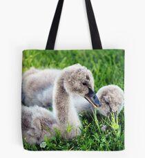 Black Swan Cygnets Tote Bag