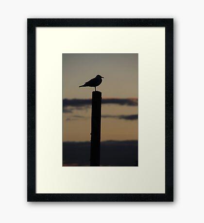 Seagull Silhouette Framed Print