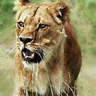 LionS by Alan Mattison