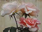 Three Roses by Eve Parry