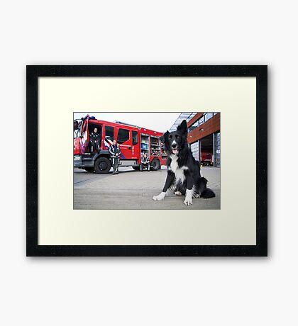 Firefighter Dog Framed Print