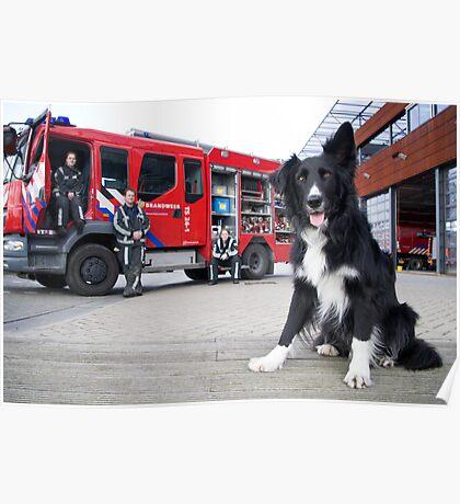 Firefighter Dog Poster