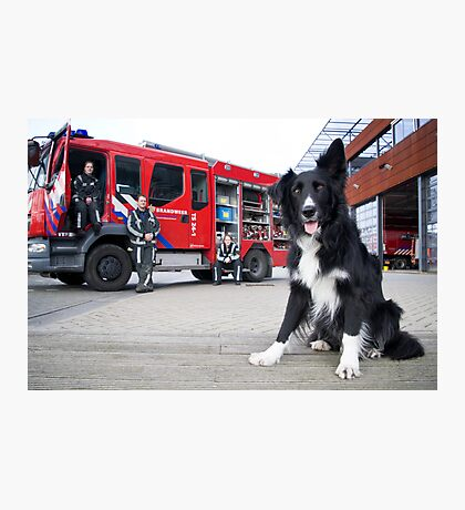 Firefighter Dog Photographic Print