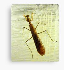 Mantis of some kind Canvas Print