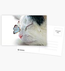 BUTTERFLY SAT ON A SLEEPING CAT NOSE  Postcards