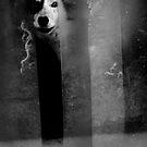 Afraid by Laura Melis