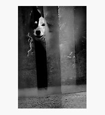 Afraid Photographic Print