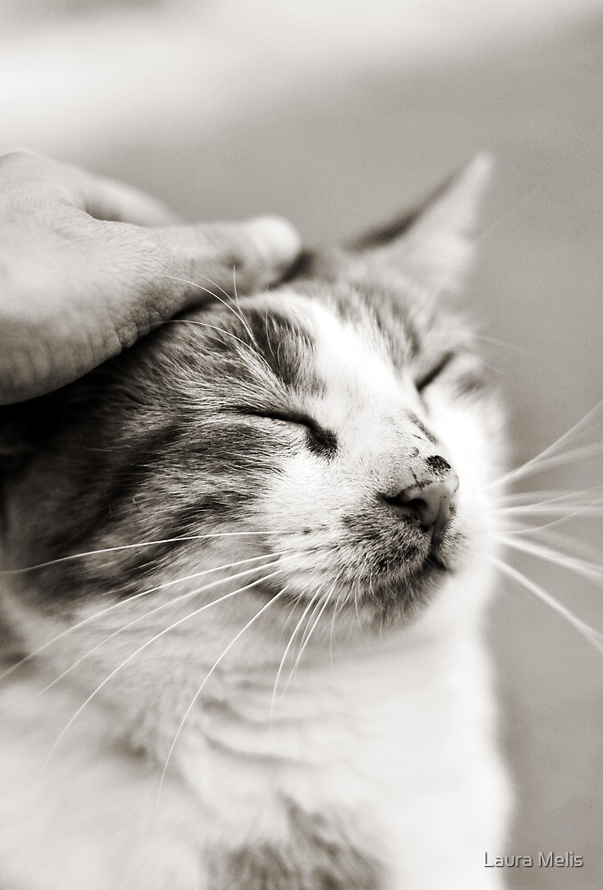 Good kitty by Laura Melis