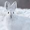 Rabbits and Bunnies ~ Peace Love and Tranquility