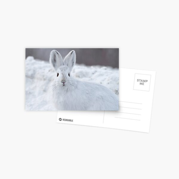 A Moment of Indecision Postcard