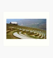 Fallow Terraces Sapa Art Print