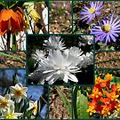 Spring colors from around the world by Irina777