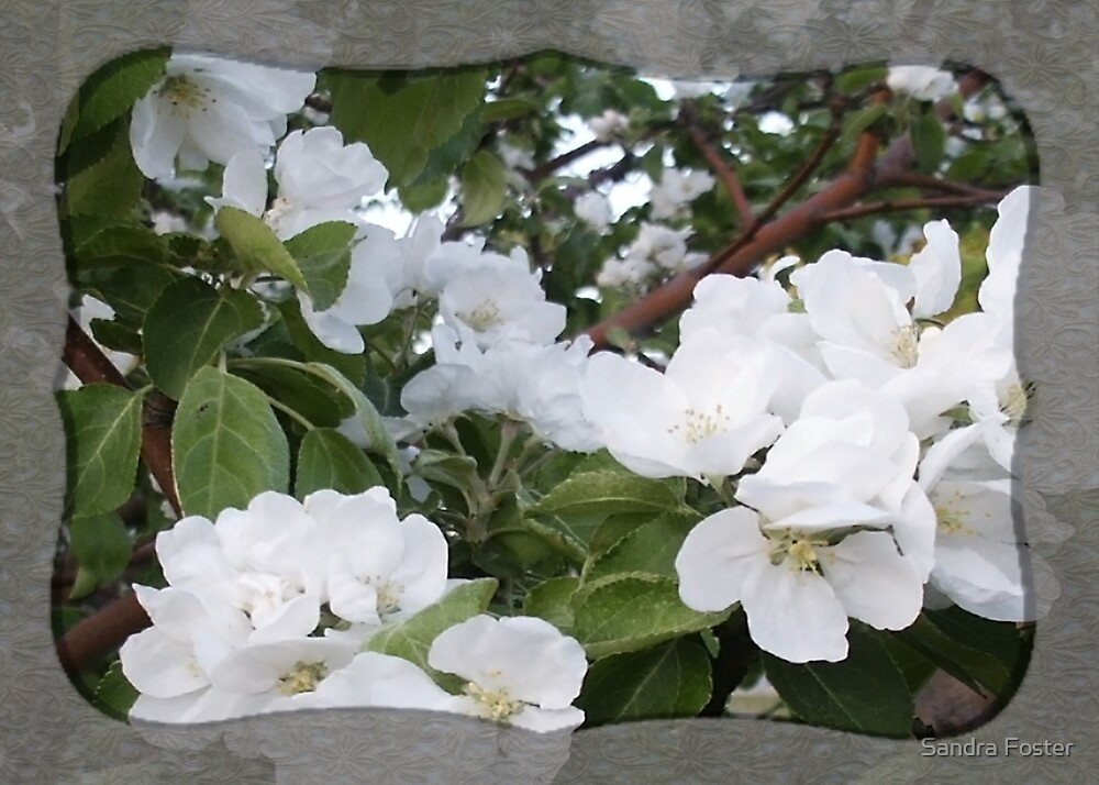Apple Blossom Purity by Sandra Foster