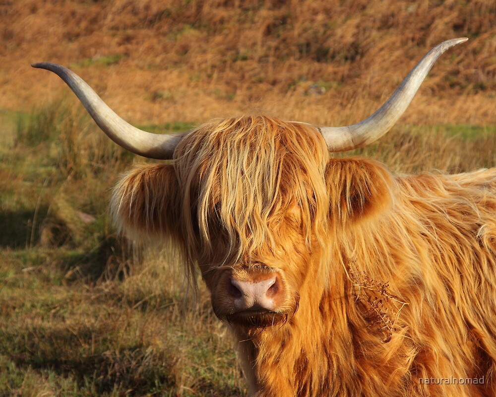 Harry Coo by naturalnomad