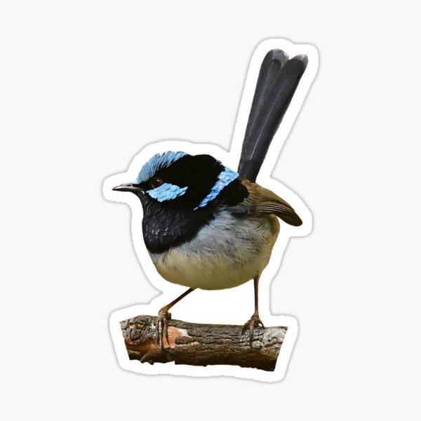 Superb Fairy-wren male 6 Sticker