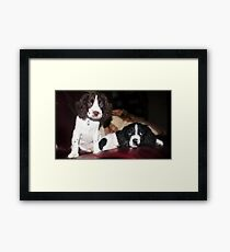 Benson and jess on sofa Framed Print