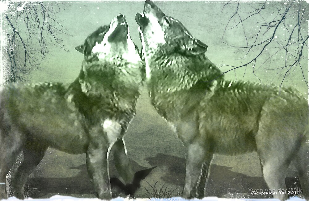 Wolves by Yvon van der Wijk