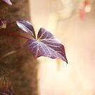 Enchanted Ivy by Donna-R