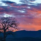 Heavenly Light by Barb Miller