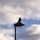 The Birds (3) by Mandy Kerr