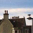 The Birds (5) by Mandy Kerr
