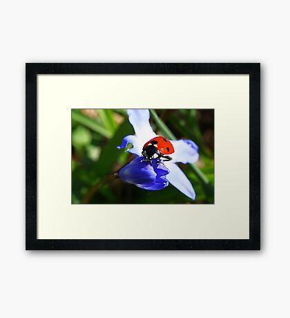 Lady on Spring Flower Framed Print