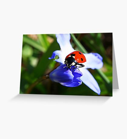 Lady on Spring Flower Greeting Card