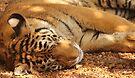 sleeping tiger by Karl David Hill