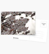 Plum Tree Postcards