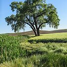 Lone Cottonwood by Linda Sparks