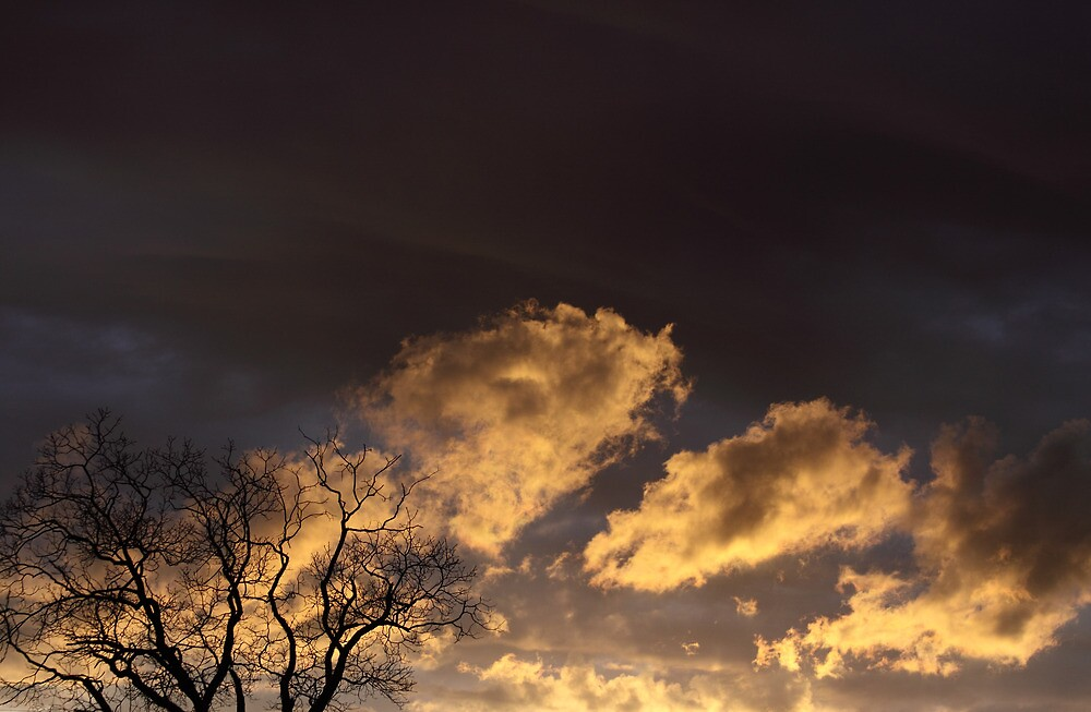 Sunset and the Hickory Tree by Leslie Guinan
