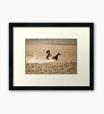 Stallion Challange Framed Print