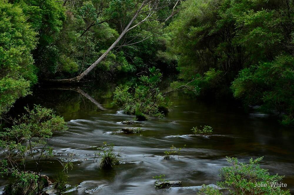 Kangaroo River. 7-3-12. by Julie  White