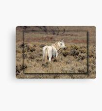 Lone White Stallion Canvas Print