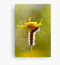Up up I go ....... Canvas Print