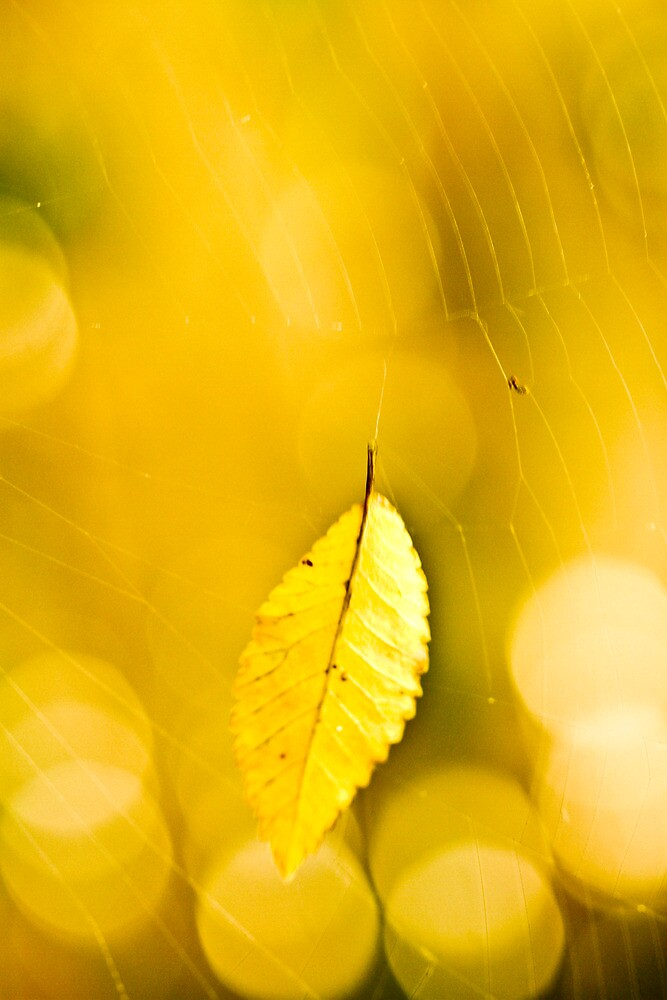 Hanging by a thread  by Nina  Matthews Photography
