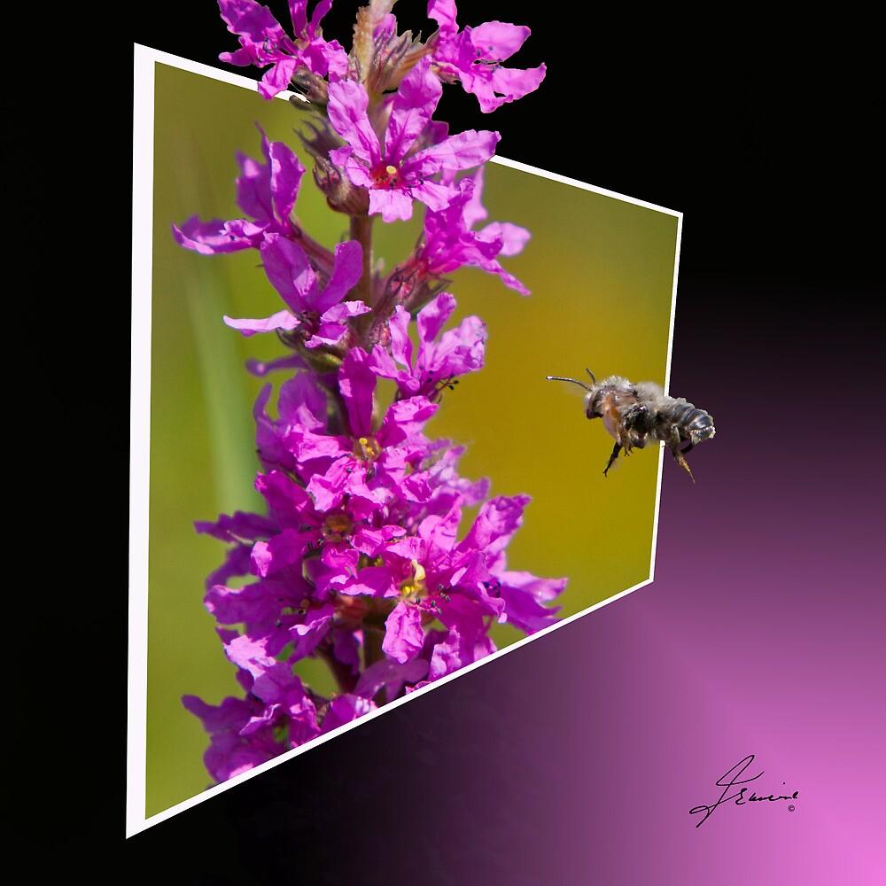 Pollinating Guest by DigitallyStill