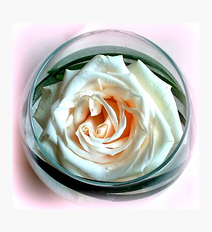 White Rose in Glass Photographic Print