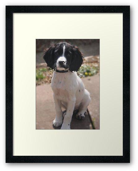 Benson at 12 weeks by Paul Morris