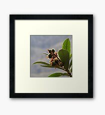 Bouquet of Young Fruits Framed Print