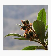 Bouquet of Young Fruits Photographic Print