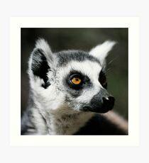 Ringtail Lemur Art Print