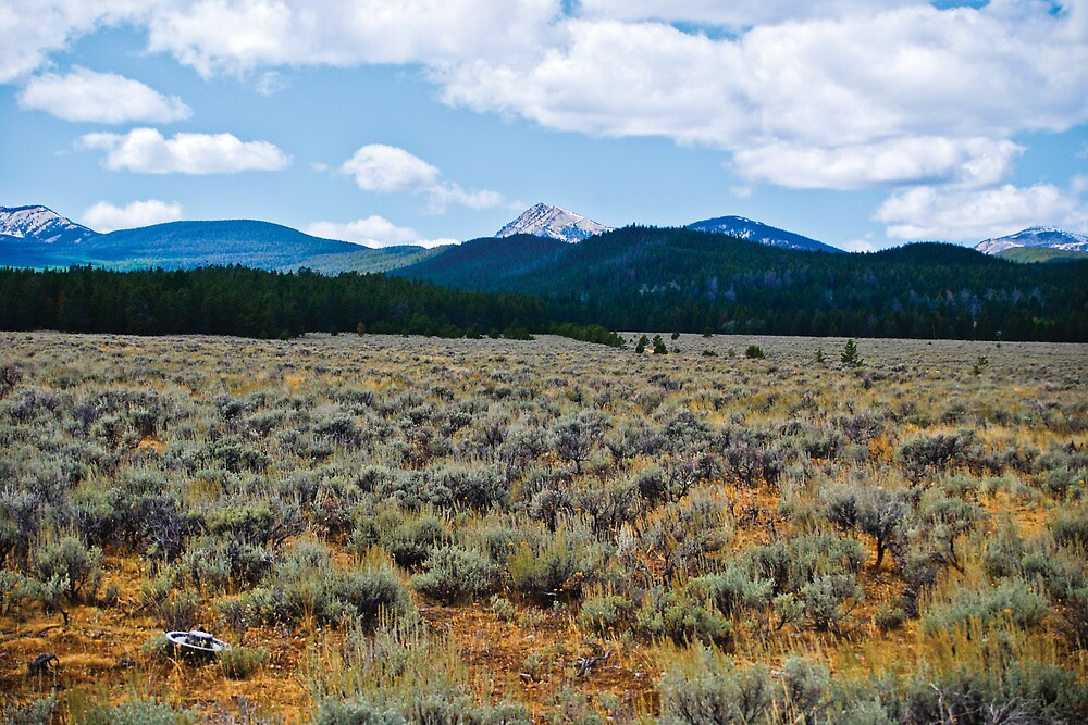 Mountains and Sage 3 by Bryan D. Spellman