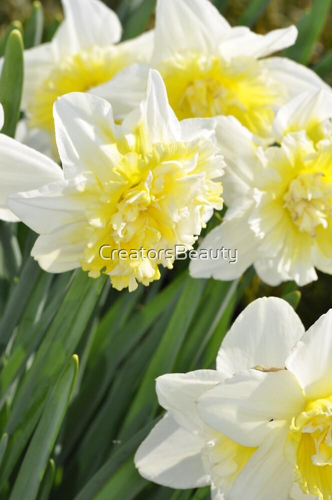 Daffodil by CreatorsBeauty