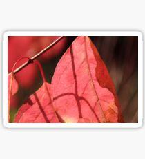 Leaf Shadow Sticker