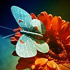 Blue Butterfly by digiphotography