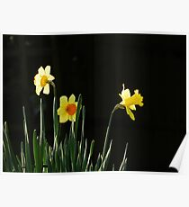 daffodils Poster