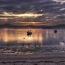 Dawn's Purple Light by Peter Hammer