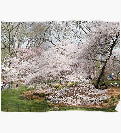 Central Park, Spring Colors, New York Poster