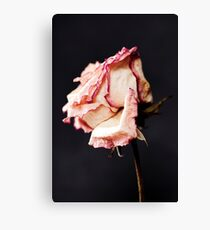 With Petals like Paper Canvas Print